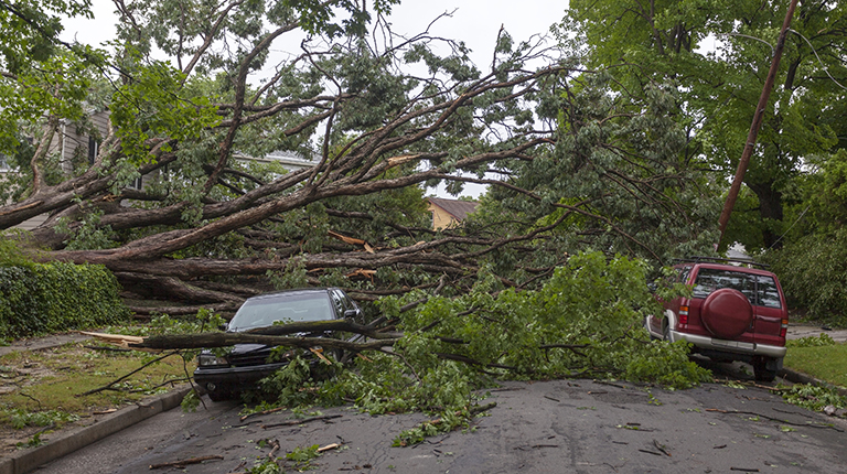 Large trees are toppled over a parked car and truck on a neighborhood street