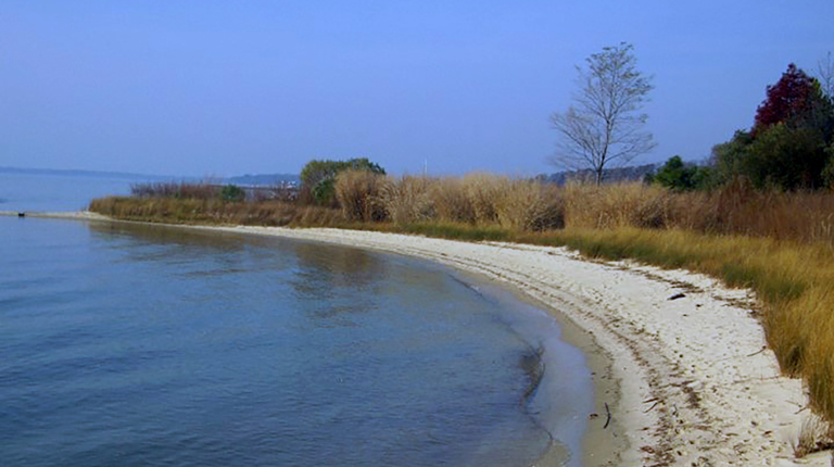 Water's edge with sand and plant life integrated as a living shoreline.