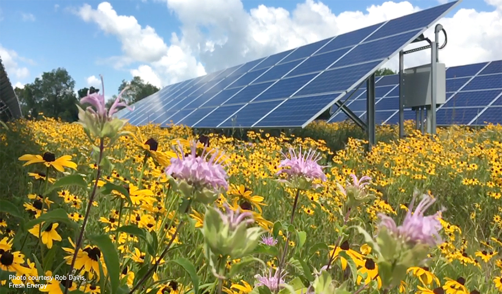 Solar panels surrounded by yellow flowers.