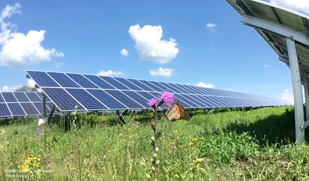 Solar panels in a field with a flower and butterfly.